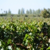 Thumbnail image for Drunk Cycling in Argentina's Wine Country