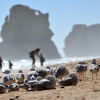 Thumbnail image for Australia's Majestic Great Ocean Road