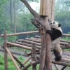 Thumbnail image for Trip Ideas: China 101
