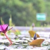 Thumbnail image for A New Lease on Life in Thailand