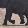 Thumbnail image for On Safari in Kruger National Park