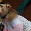Thumbnail image for The Monkey Man of Kuala Lumpur