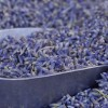 Thumbnail image for The Great Lavender Schism