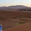 Thumbnail image for Camping, Camels and Sand Dunes