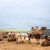 Thumbnail image for 30 Pictures That Will Make You Want to Visit Mongolia