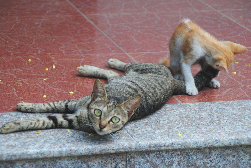 Travel in Cat Ba, Vietnam