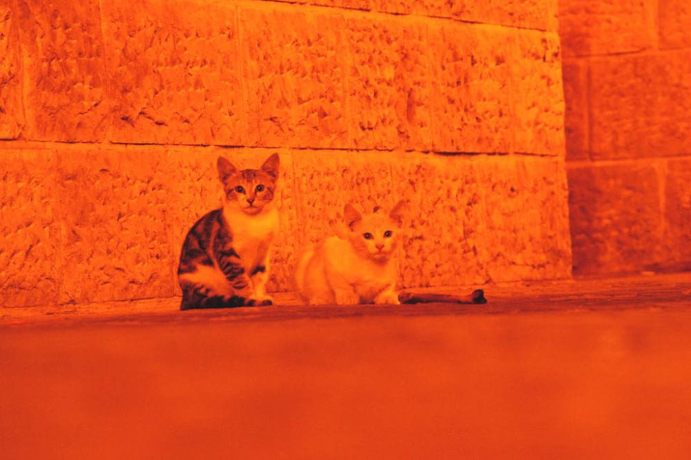 Cats at night in Jerusalem