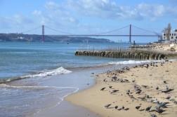 CSC 0989 6318543506 l 252x167 Lisbon Travel Photos: The Origin