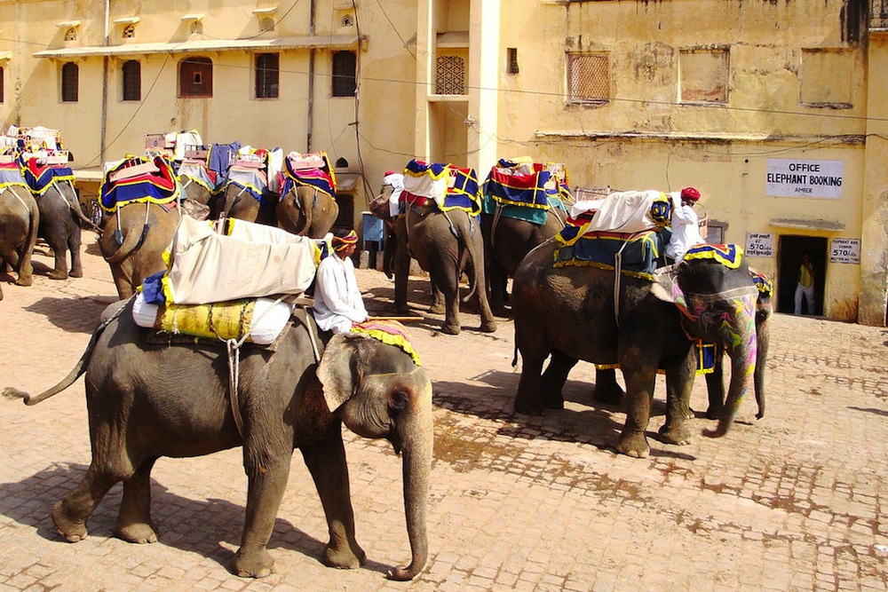 Elephants in Jaipur, India