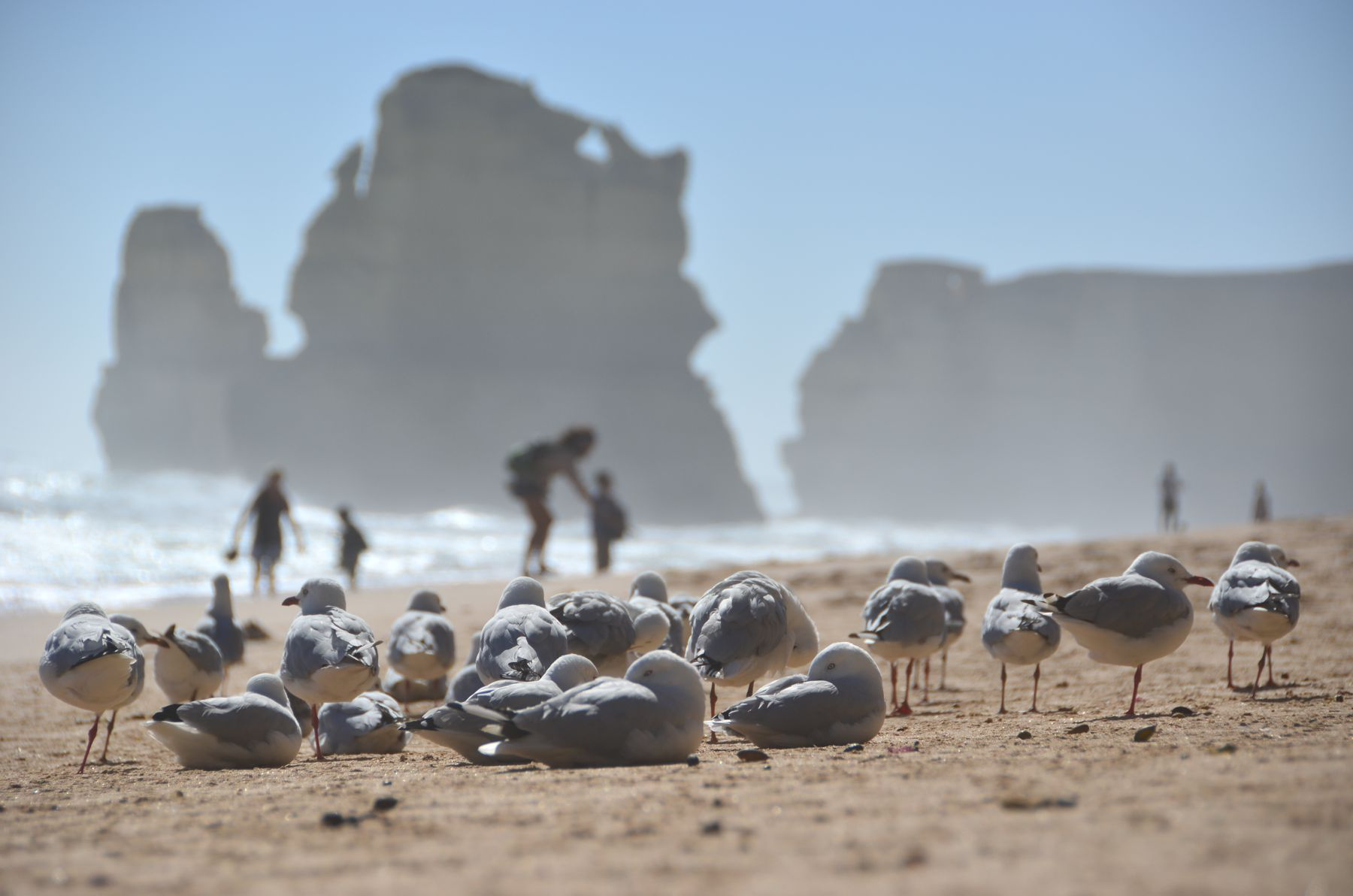 Essay about australia tourism information