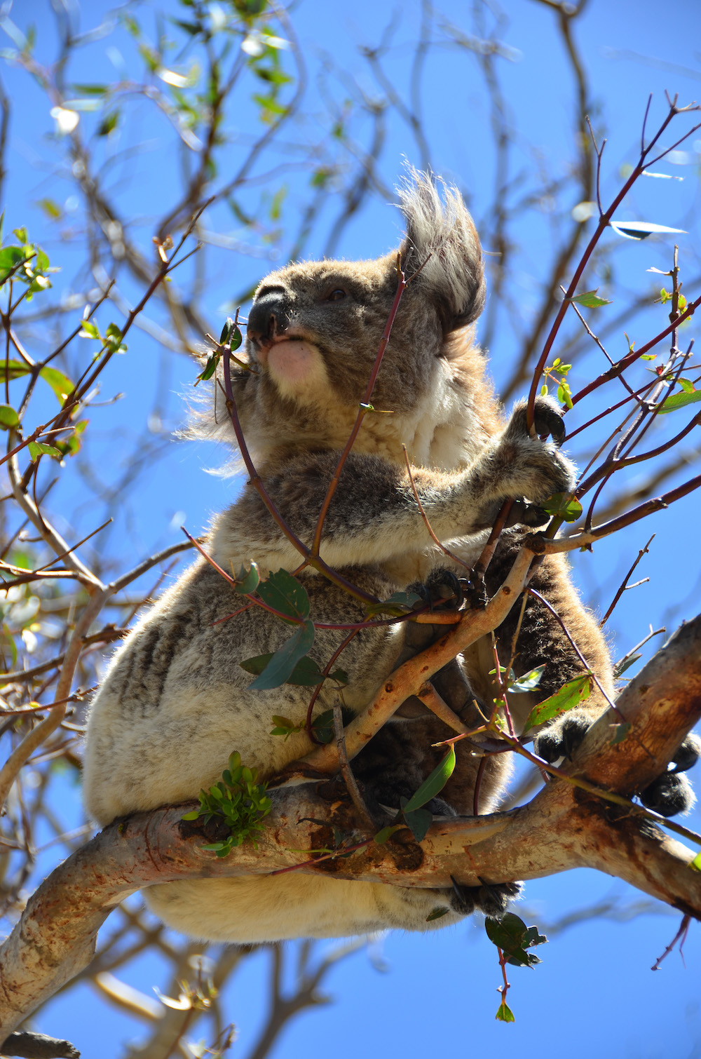 koala essay Koala essay - learn all you have always wanted to know about custom writing qualified scholars engaged in the company will write your task within the deadline instead of worrying about term paper writing get the needed assistance here.