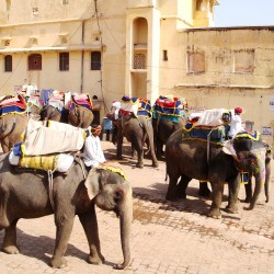 Elephant Tours Amber Fort Jaipur India
