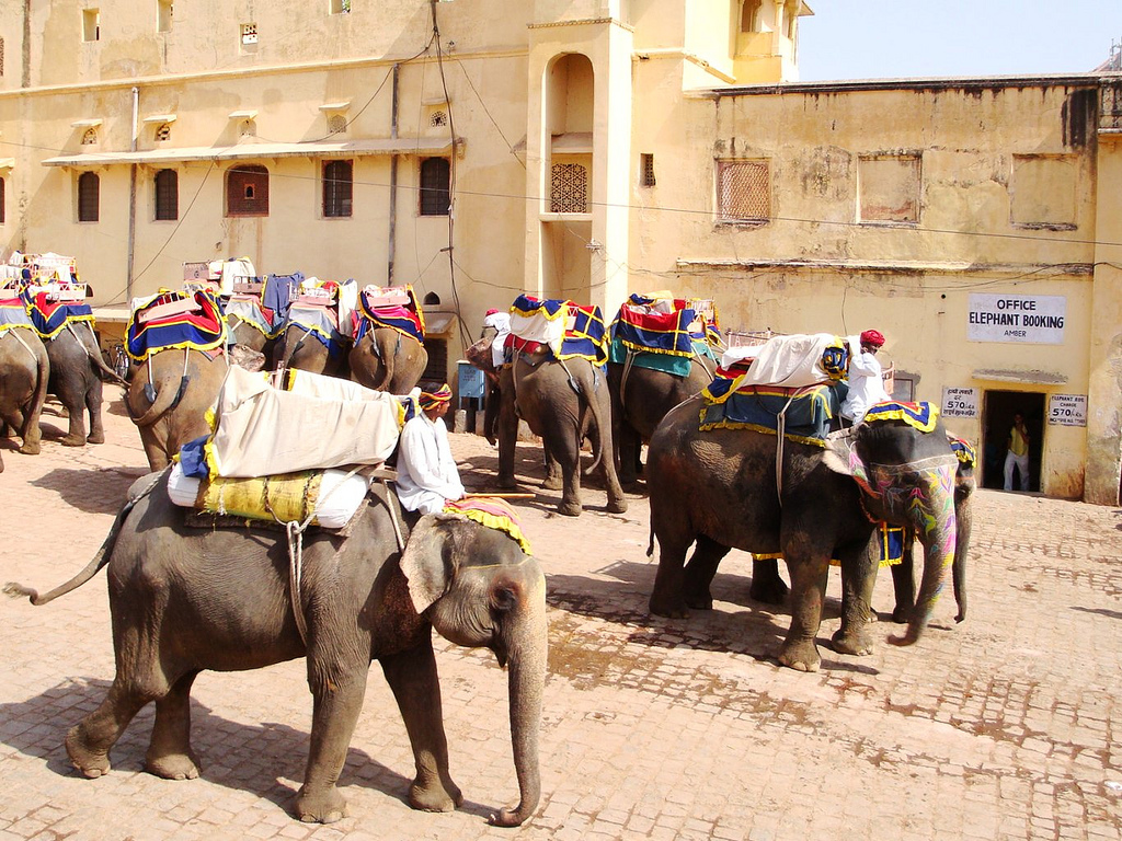 Elephant Tours Amber Fort Jaipur India Its India Week!