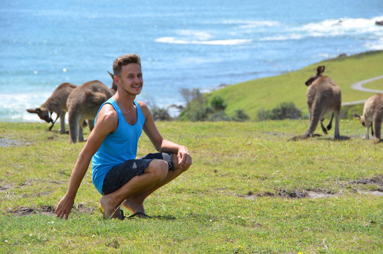 Best tour to see wild koalas and kangaroos in Melbourne