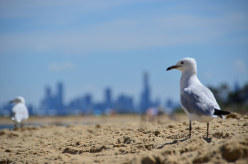 Skyline of Melbourne Australia 500x331 10 Truths from Two Years of Travel