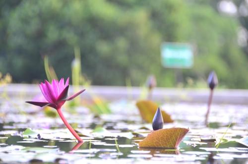 New Life Foundation Thailand