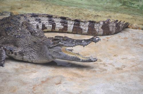 Samutprakan Crocodile Farm