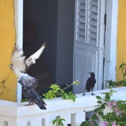 Balcony in Cartagena Colombia