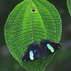 Butterfly on Leaf in Colombia