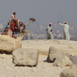 Camels in Cairo Egypt