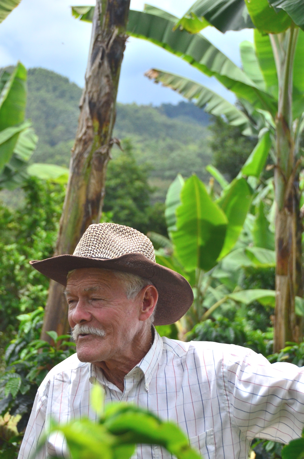 Coffee Finca in Salento Colombia1 2012 in Review    and a 2013 Preview