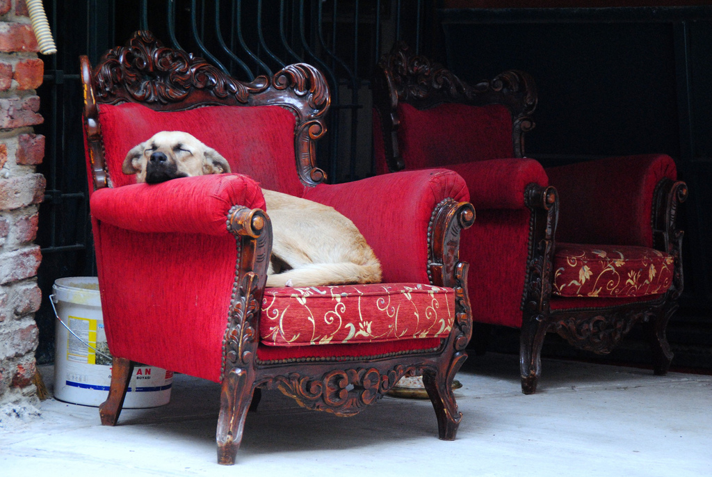 Dog in Istanbul