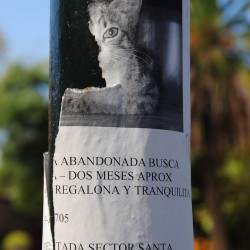 Lost Cat Flyer in Santiago Chile