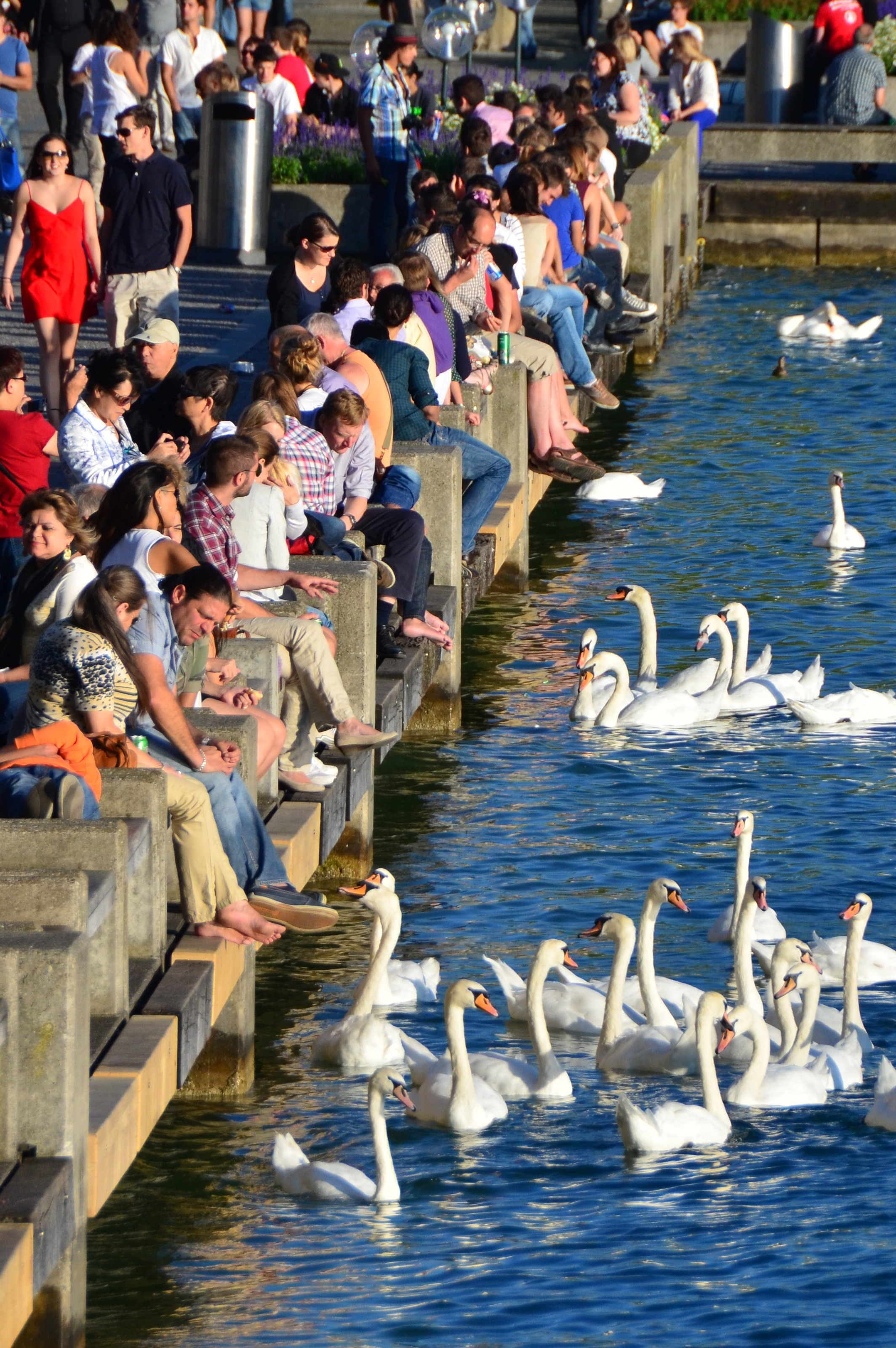 Swans at Lake Zurich1 e1356963721873 2012 in Review    and a 2013 Preview