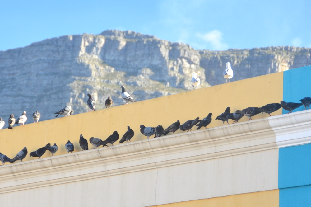 Table Mountain towers over Bo Kaap, providing stunning photo opportunities
