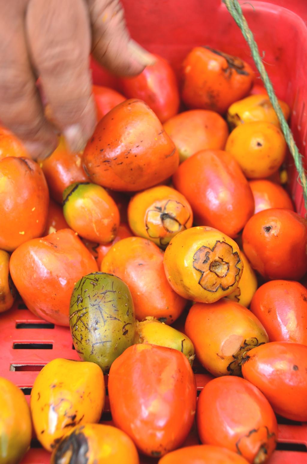 Chontaduro Palm Fruit Colombias Dreamlike Valle del Cocora