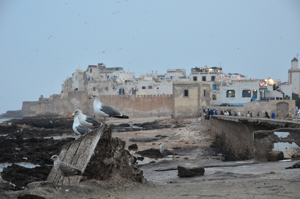 Essaouira Morocco The Best of Morocco in 10 Days