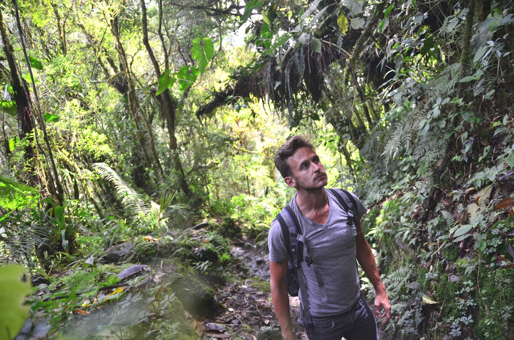Hiker in Valle del Cocora