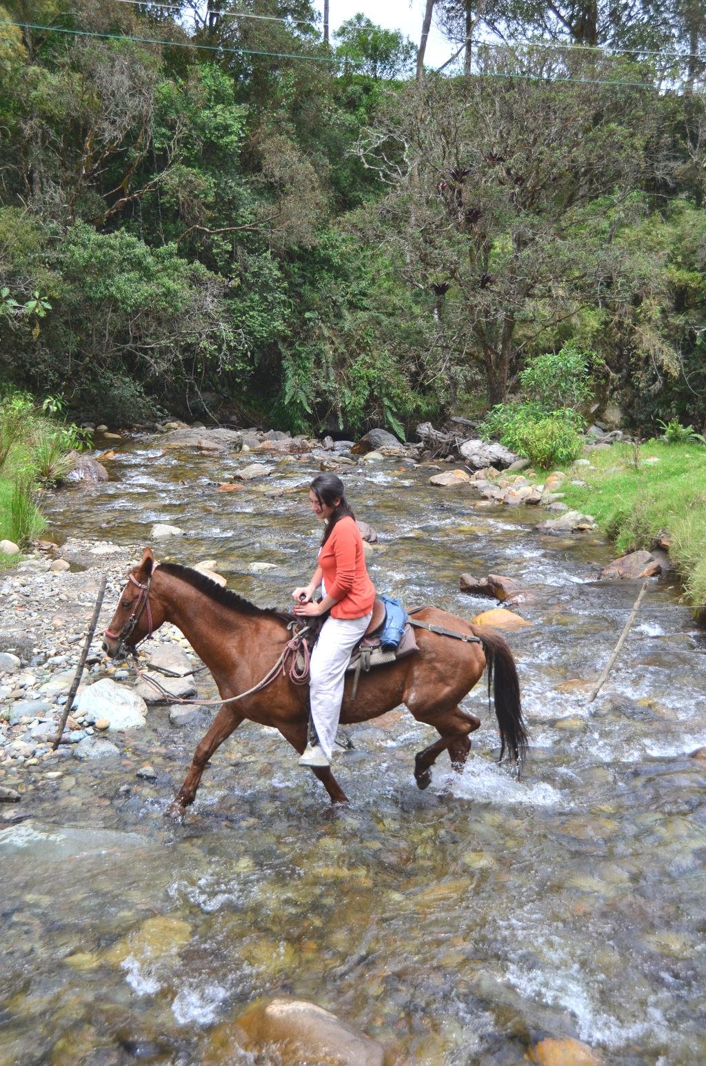 Colombia horseback ride