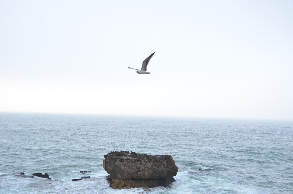 Seagull in Essaouira Morocco The Best of Morocco in 10 Days