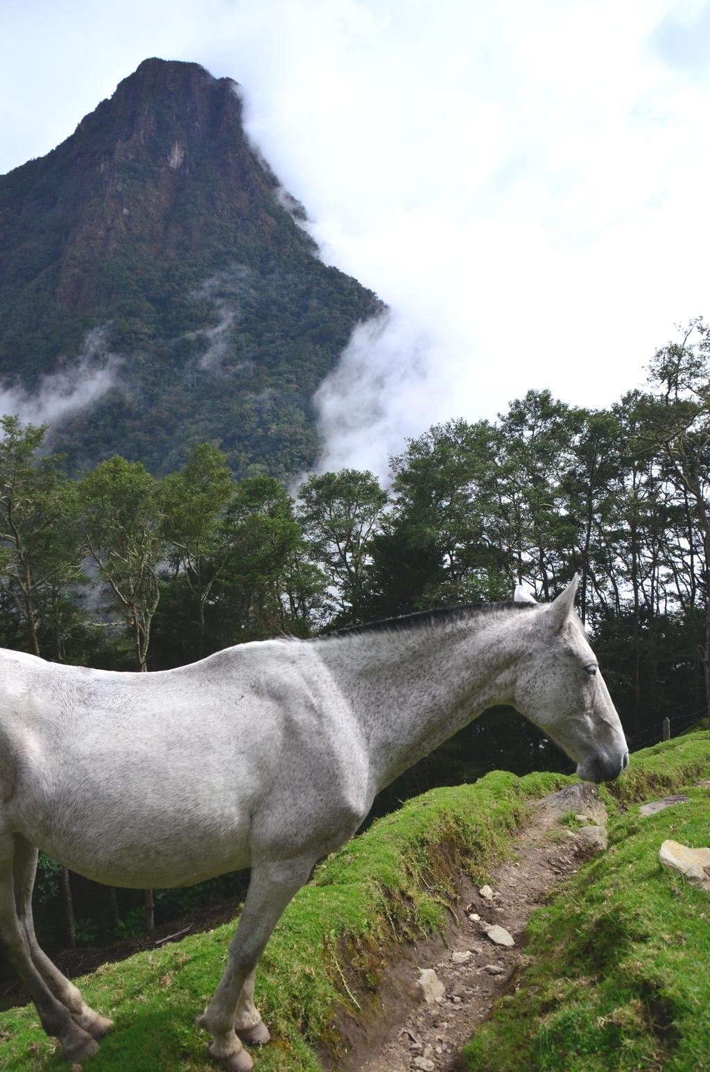 Colombian wild horses