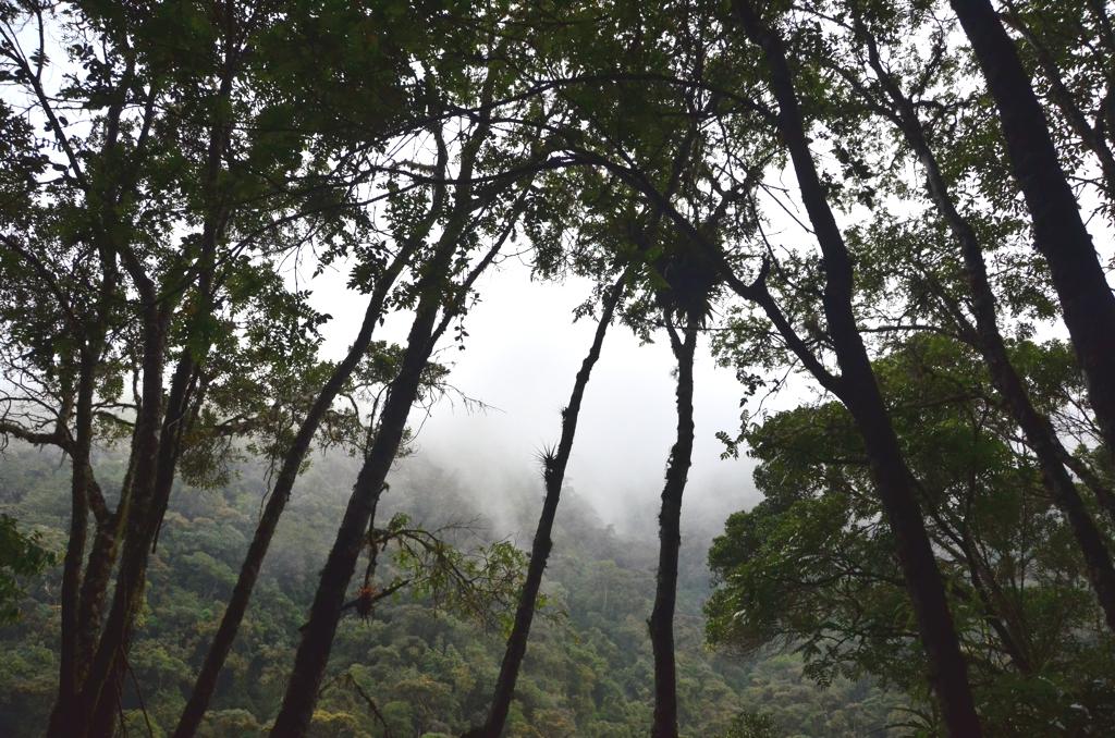 Valle del Cocora landscape