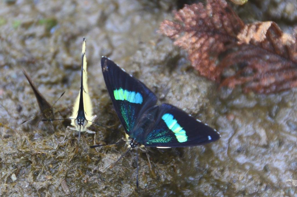 Valle del Cocora Butterflies Colombias Dreamlike Valle del Cocora