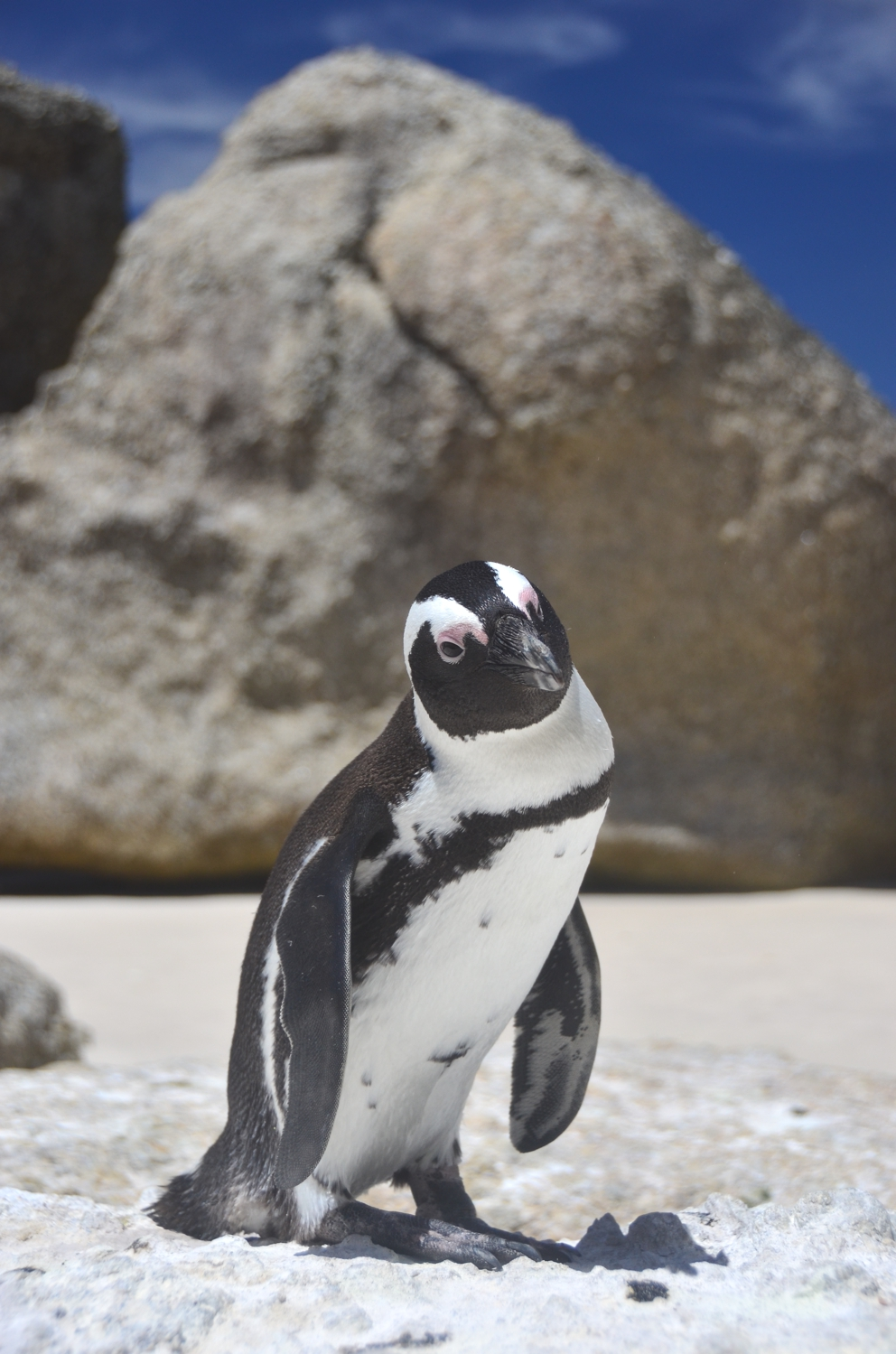 Boulders Beach, located in Simon's Town, is a popular stop en-route to Cape Point