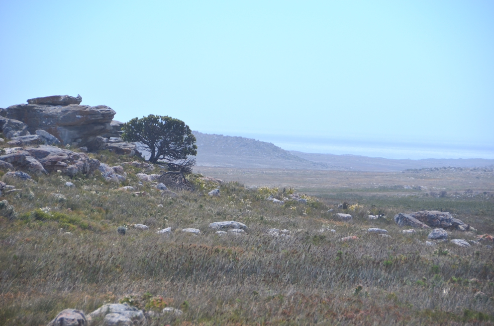 The landscape of Cape Point national park is stark and alien