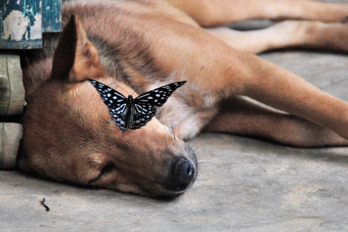 Dog and Butterfly in Laos