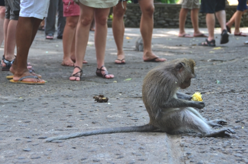 Visit the Sacred Monkey temple – you'll be in good company
