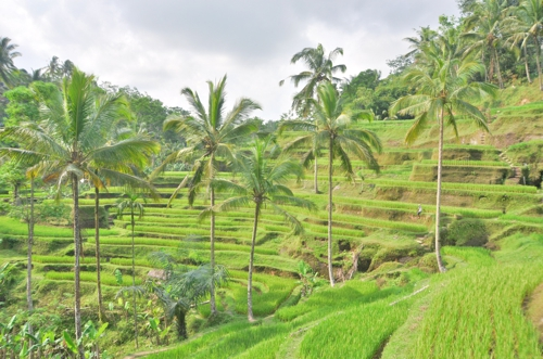 The Tegalagang Rice Terraces are a good balance of accessible and picturesque