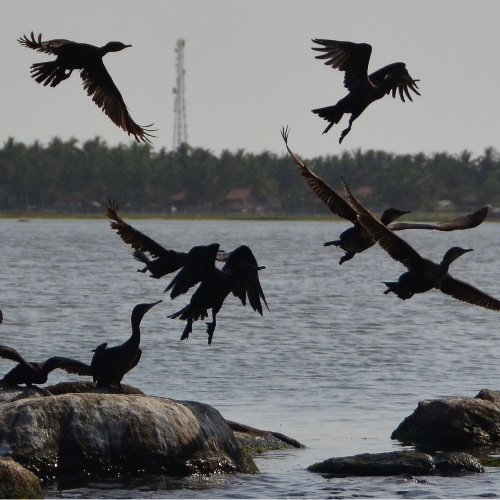 Arugam Bay Lagoon Birds