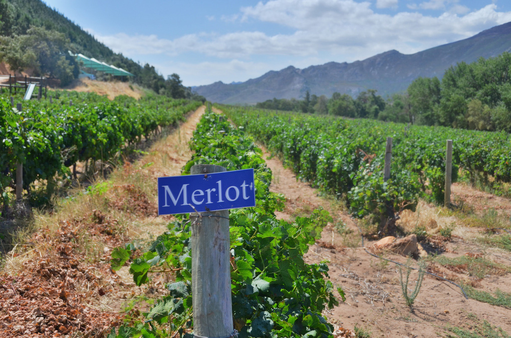 South Africa wineries
