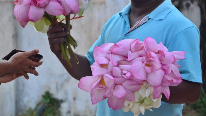 Lotus in Sri Lanka