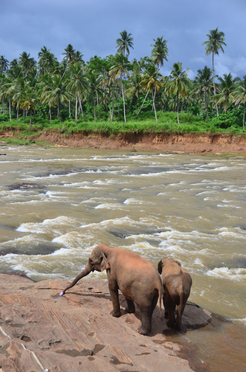Elephants arrive to river