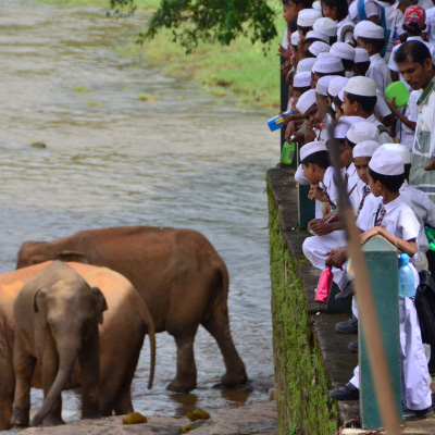 Schoolchildren greet elephants