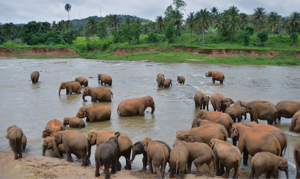 Elephant at the river