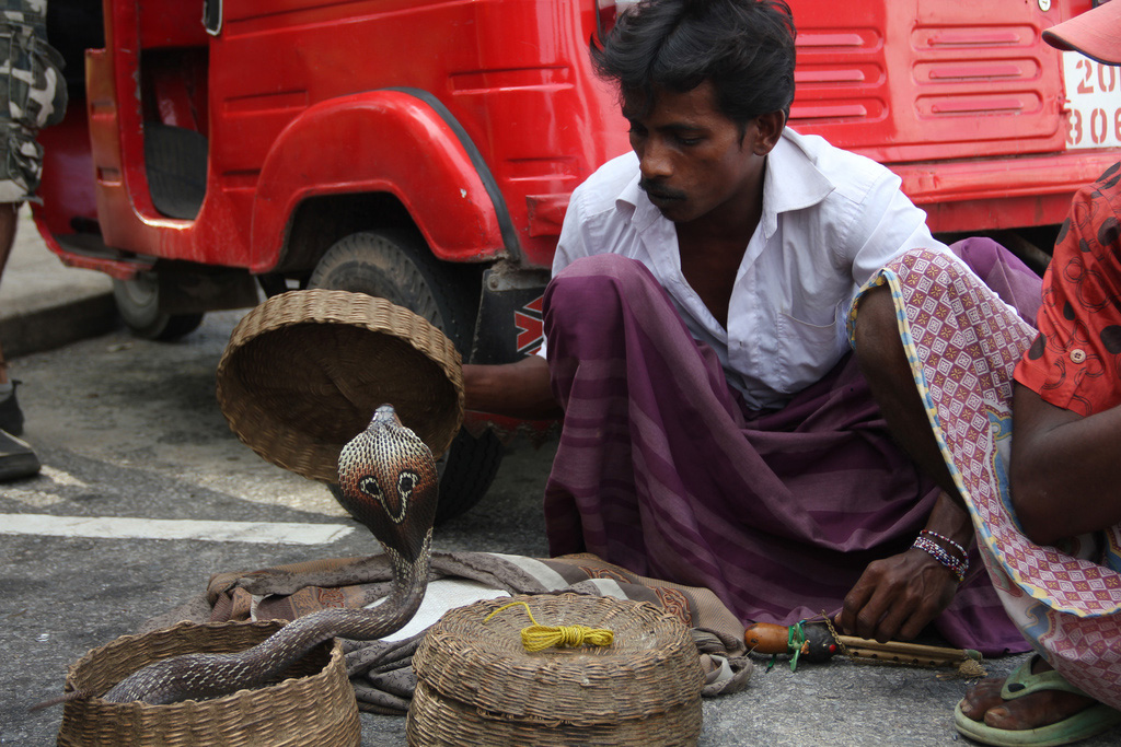 A Cobra charmer on the streets of Colombo, Sri Lanka