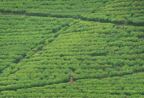 Sri Lanka Tea Country